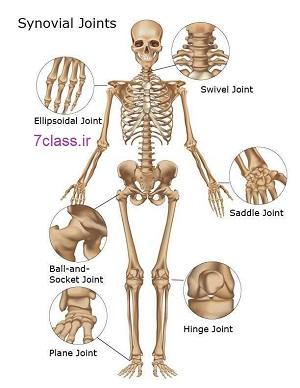 انواع مفصل حرکت بدن علوم پنجم